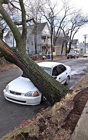 Weather_tree_blown_down