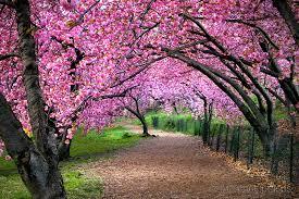Centralpark_springtime