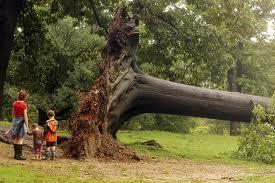 Fallen_tree_central_park
