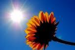 Weather_hot_sun2