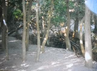MeatRack_Trees