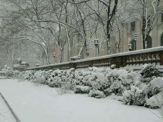 Feb9 hedges (1)