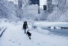 Snow in  central park - wabc