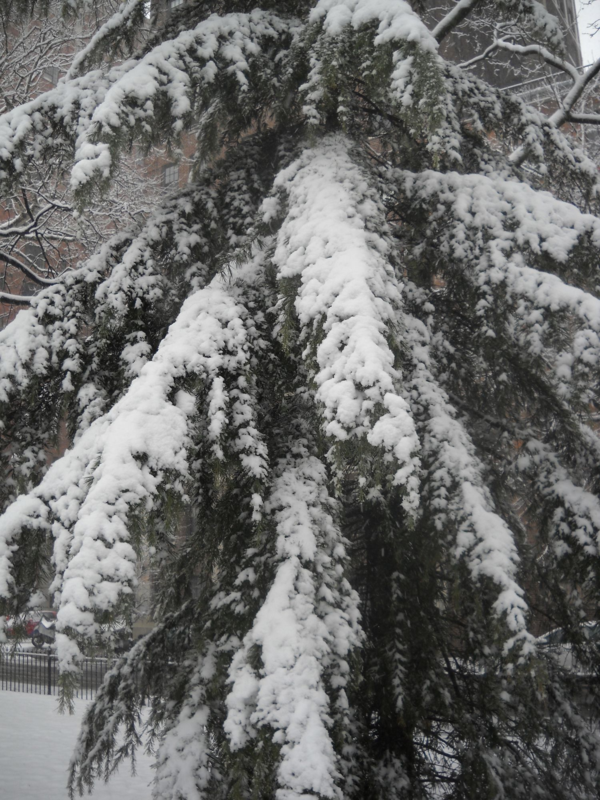 Today In New York Weather History: March 8