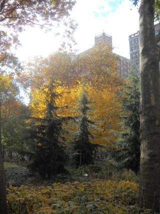 Autumn.washington.square.park