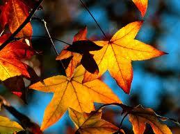 Autumn_leavesl