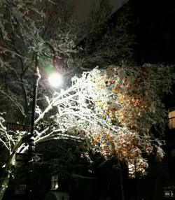 Barrow street-first snow